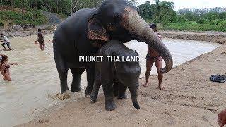 Gambar cover TRAVEL VLOG #5   PHUKET THAILAND   HORRIBLE AIRBNB EXPERIENCE