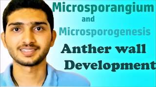 🌷Microsporangium || Microsporogenesis || Anther wall development