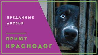Приют для животных Краснодог. Шанс на жизнь.