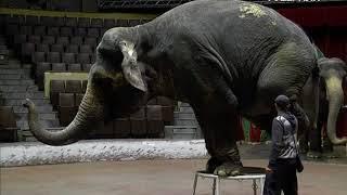 Индийские слоны прибыли в Самару