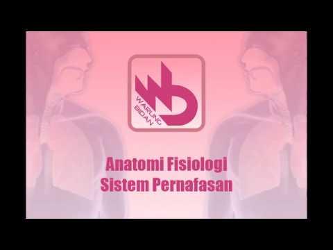 Video - Anatomi Fisiologi Sistem Pernafasan pada Manusia Lengkap Detail