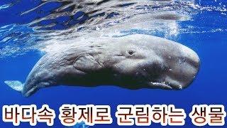 바다속 최강으로 불리는 생물 TOP5