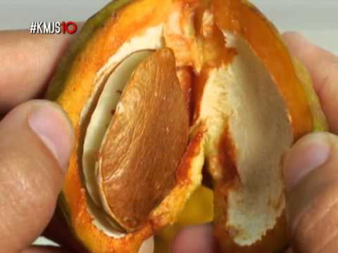 The goodness of Philippine exotic fruits | KMJS
