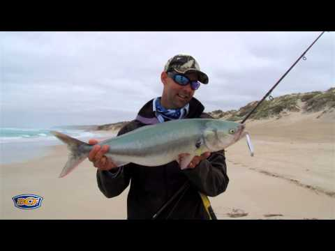 BCF Club Out There - Australian Salmon
