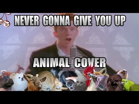 Rick Astley - Never Gonna Give You Up (Animal Cover)