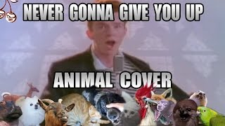 Baixar Rick Astley - Never Gonna Give You Up (Animal Cover)
