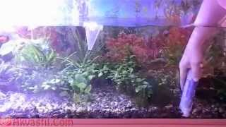Аквариумистика. Подмена воды в аквариуме. Уход за аквариумом.(, 2013-04-21T15:22:43.000Z)