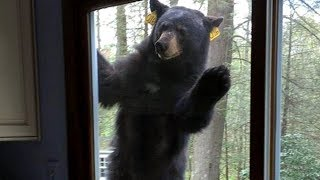 Young Boy Makes A Bold Move To Save His Mom After A Bear Breaks Into Their House