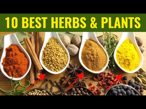 Top 10 Best Medicinal Herbs For Health & Vitality