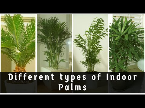 indoor tree plants