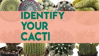 Cacti Identifications | Names of Cacti (30+) YouTube Videos