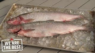 Lake whitefish from Hay River, a fishing tale that began in 1892 | We Are The Best