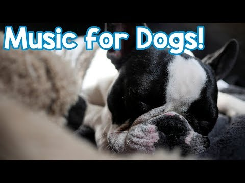 Lullaby Music for Dogs! Help Your Dog Sleep Relaxing Music!