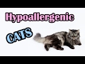 13 Hypoallergenic Cats