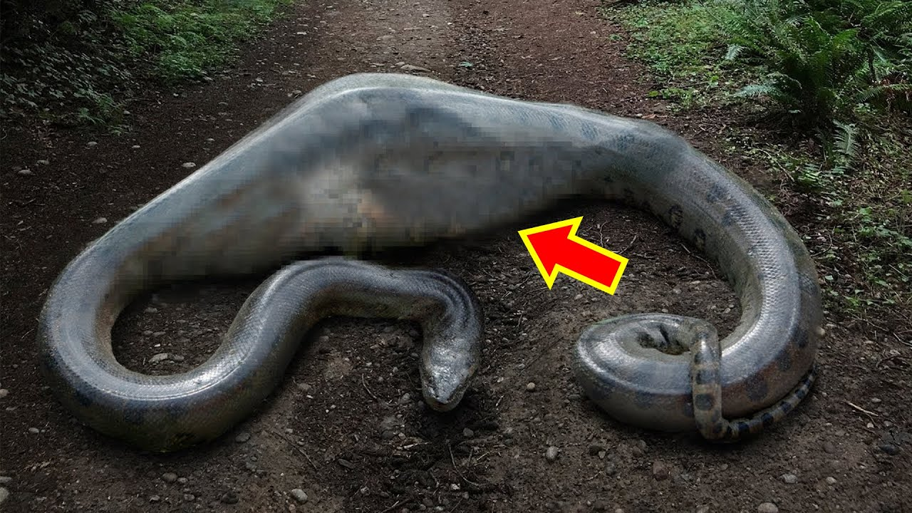 10 Craziest Things Found Inside Snakes