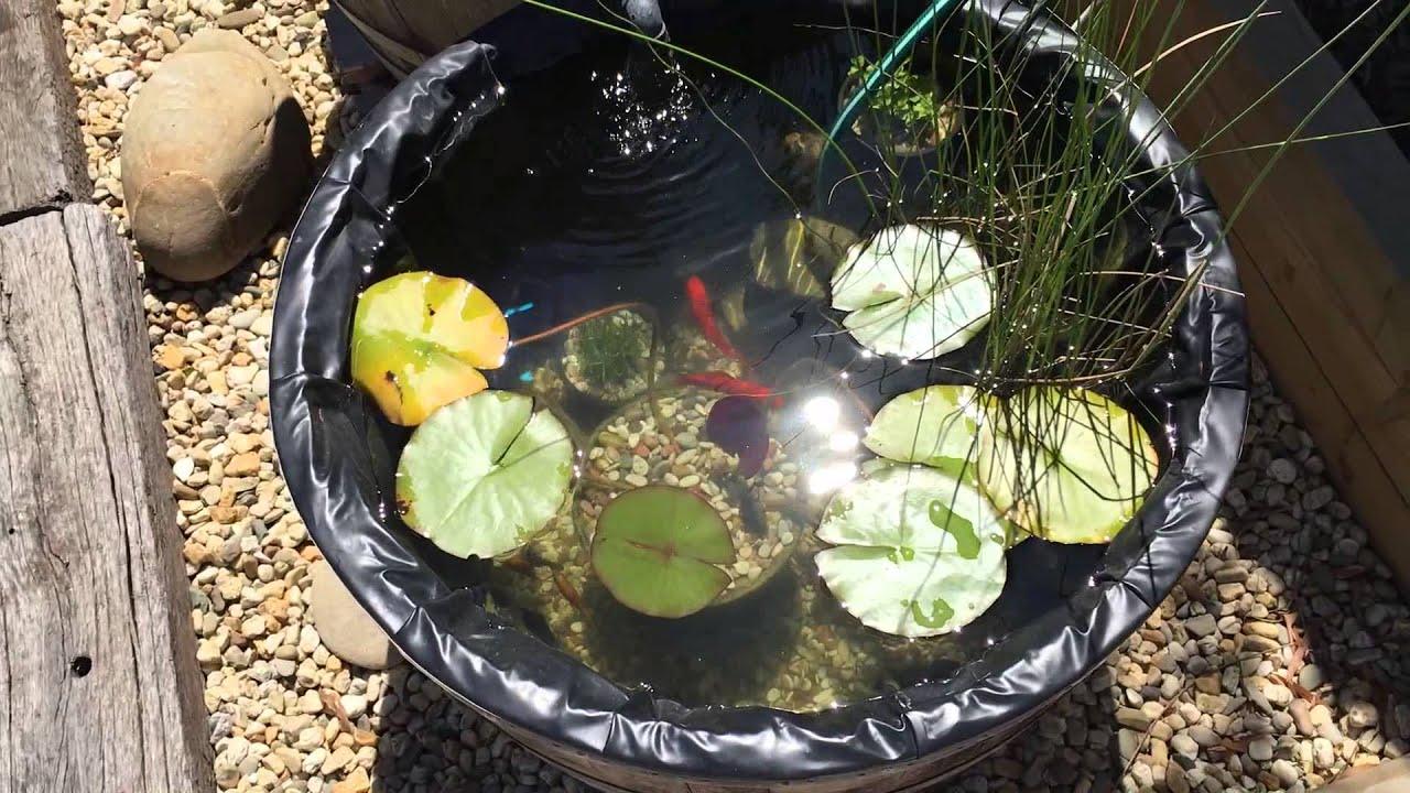 Wine Barrel Goldfish Pond Youtube