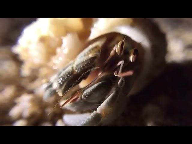 小琉球芭扎民宿-寄居蟹