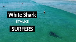 White Shark Stalks Surfers - Drone Footage - Tuncurry Beach NSW