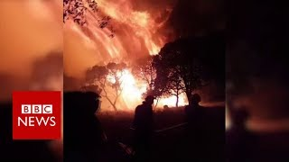 Tourists flee raging wildfires across French Riviera - BBC News