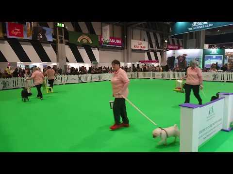 Dog Parkour UK Crufts 2020