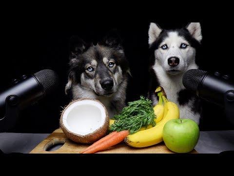 asmr-dog-teaches-best-friend-how-to-asmr!