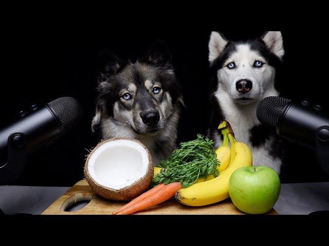 ASMR Dog Teaches Best Friend How To ASMR!