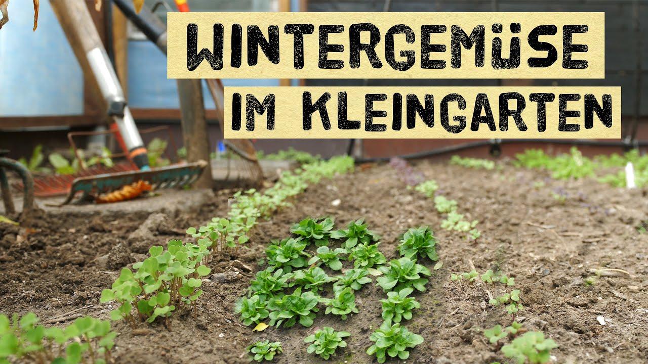 Download Wintergemüse aus dem Kleingarten - so viel kann jeder anbauen. Ernten im Winter im Gemüsegarten