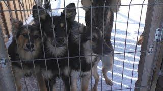 7 хвостиков ищут дом  Взять собаку из приюта