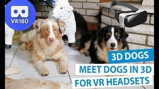 3D Meet the Animals: Meet Dogs in 3D 180° [VR180]
