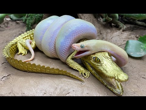 Stop Motion ASMR - Big Python eats Alligator Goldfish Koi Carp Cooking Experiment Unusual Under Mud