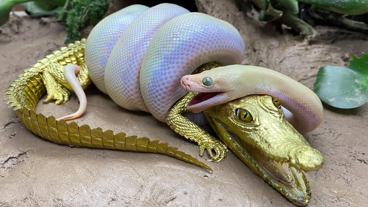 Download Stop Motion ASMR - Big Python eats Alligator Goldfish Koi Carp Cooking Experiment Unusual Under Mud