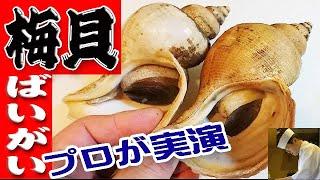 バイ貝のさばき方【刺身編】(Whelk)