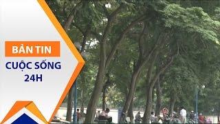 Chặt cây sưa tại Hà Nội: Thực hư ra sao? | VTC1