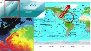 Surface Currents