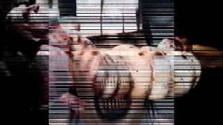 Marilyn Manson - Doll-Dagga Buzz-Buzz Ziggety-Zag