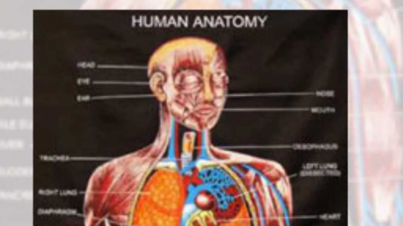 7 Tips How To Learn Anatomy Physiology Easily Youtube