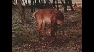 Лесная симфония 1967