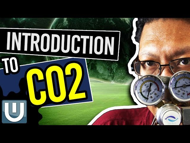 Introduction To Co2 - The Ultimate Aquarium Co2 Guide - Part 1