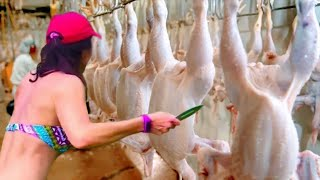 The biggest chicken factory in the world. Scary Scenes.