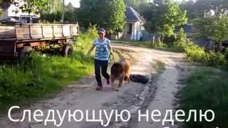 Прокачка собак без вреда для здоровья