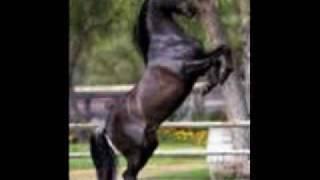 horses~lose control