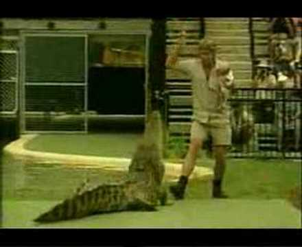 Seven News - Steve Irwin killed - 04 September 2006
