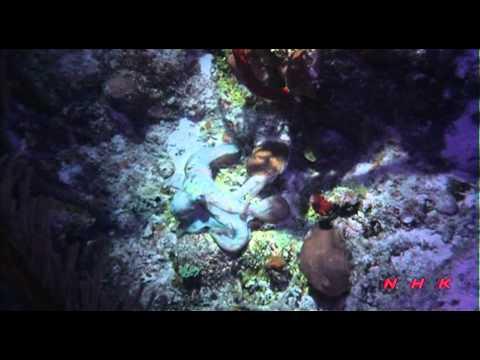 Belize Barrier Reef Reserve System (UNESCO/NHK)
