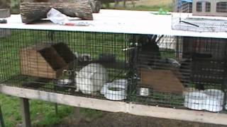 Rabbit Cage Types And Sizes