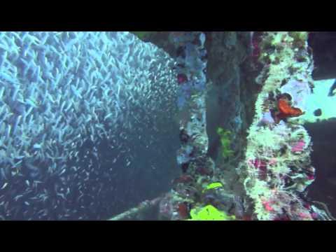 Florida West Coast Wreck Diving - Sheridan Tug