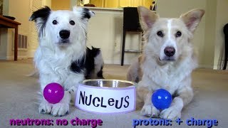 Dogs Teaching Chemistry - The Atom
