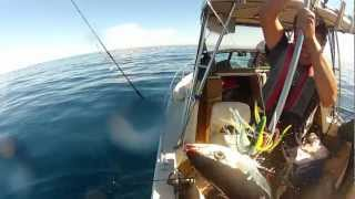 Albacore Tuna fishing out of Golden Gate