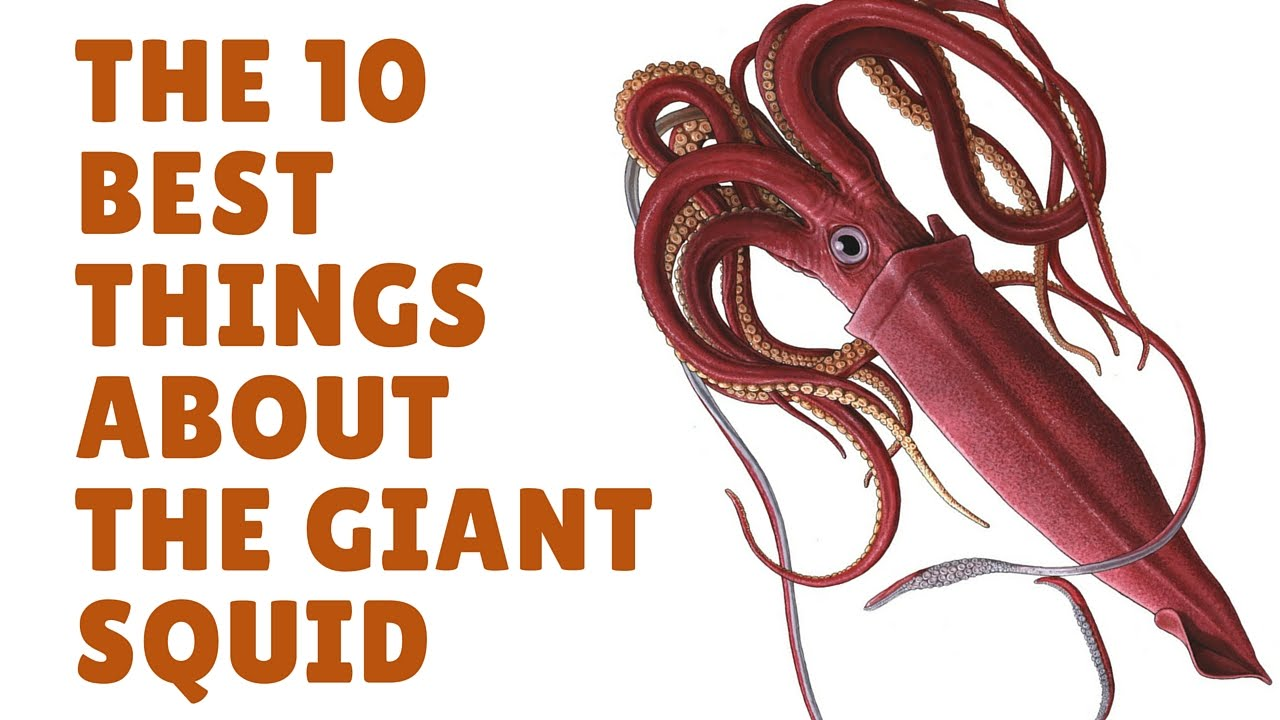 The Giant Squid Facts | Squid Facts - YouTube