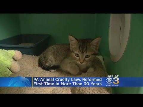 PA Reforms Animal Cruelty Law After More Than 30 Years