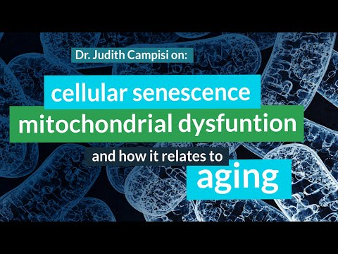 Judith Campisi, Ph.D. on Cellular Senescence, Mitochondrial Dysfunction, Cancer & Aging